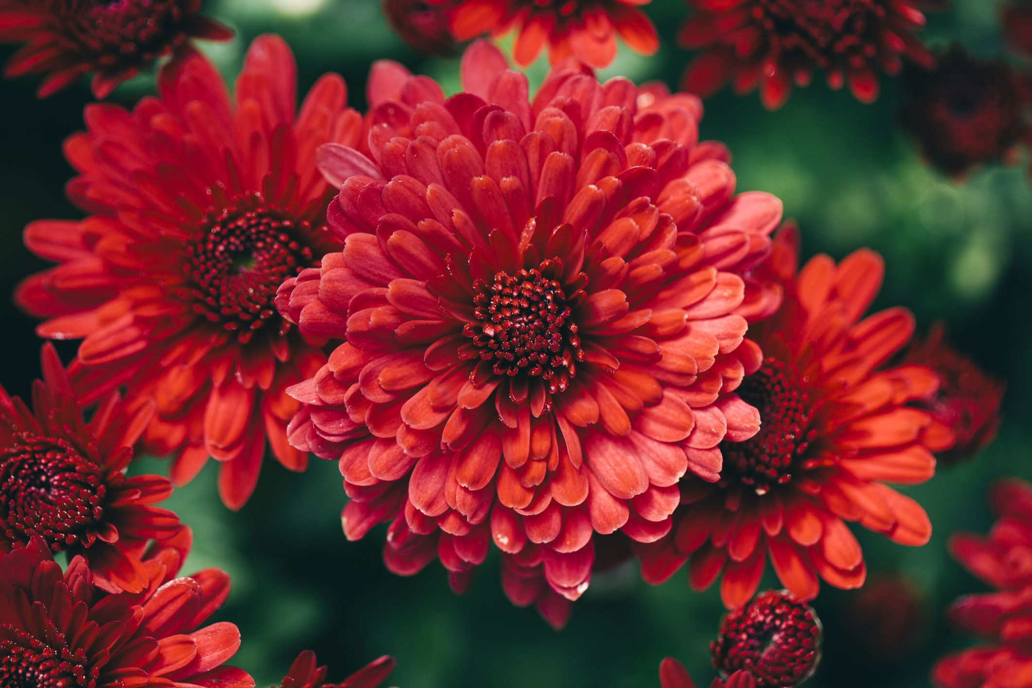 fall flowers desktop background images hd wallpapers page 0