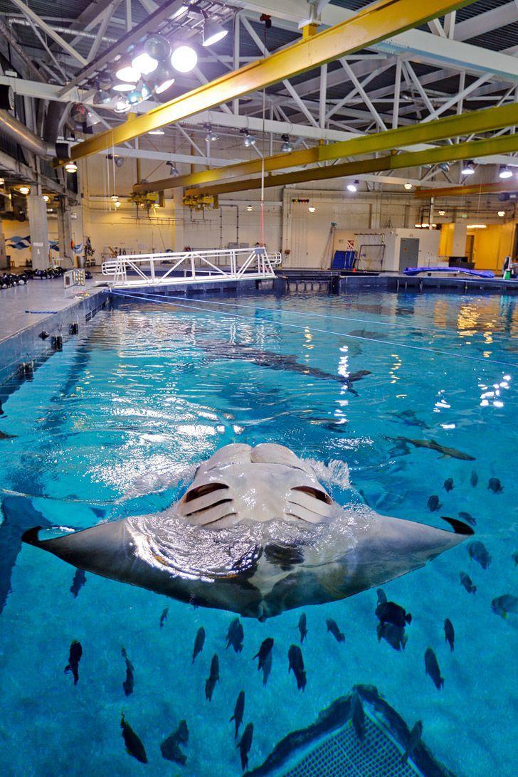 Diving in the Georgia Aquarium with Whale Sharks | Georgia ...