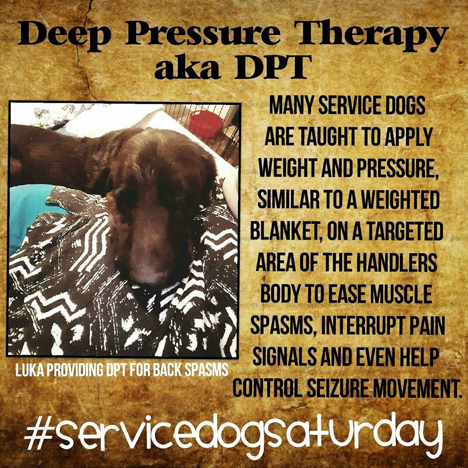 SERVICE DOG SATURDAY WITH THINK PAWSITIVE PUP TASKING