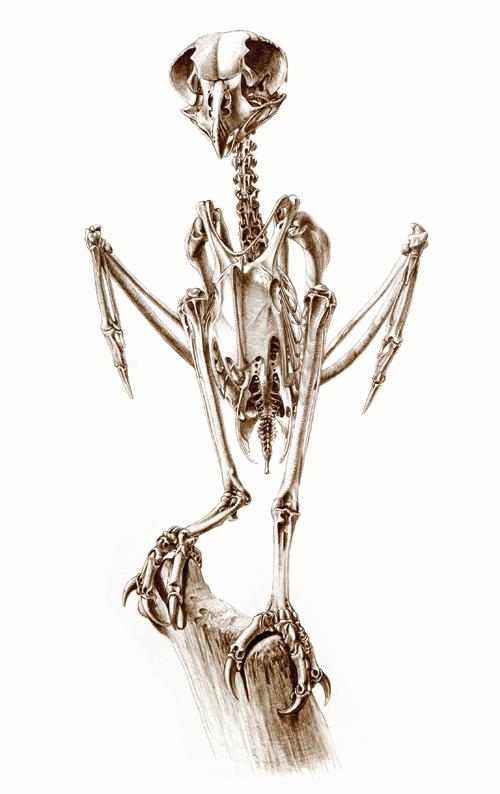 Skeleton of Brown Fish Owl | Fauna | Pinterest | Skeletons ... - photo#29