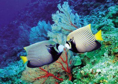 Seascope Adventure - From Sharm El Sheikh