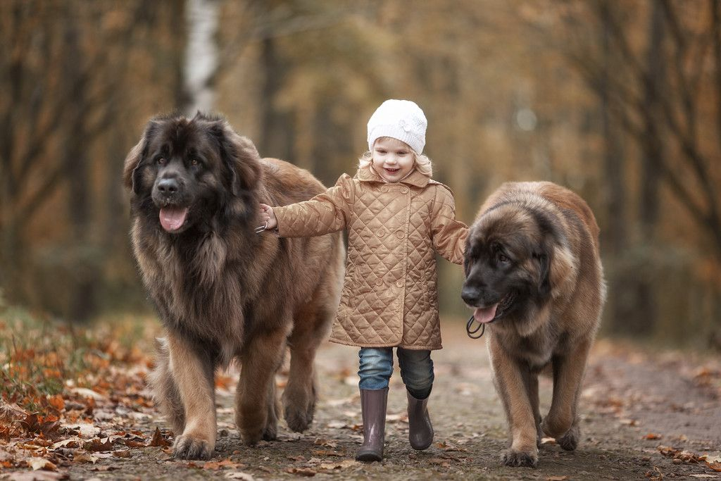 HttpwwwgreatdanephotographyPrintsLittleKidsandtheirBig - Tiny children and their huge dogs photographed in adorable portraits by andy seliverstoff