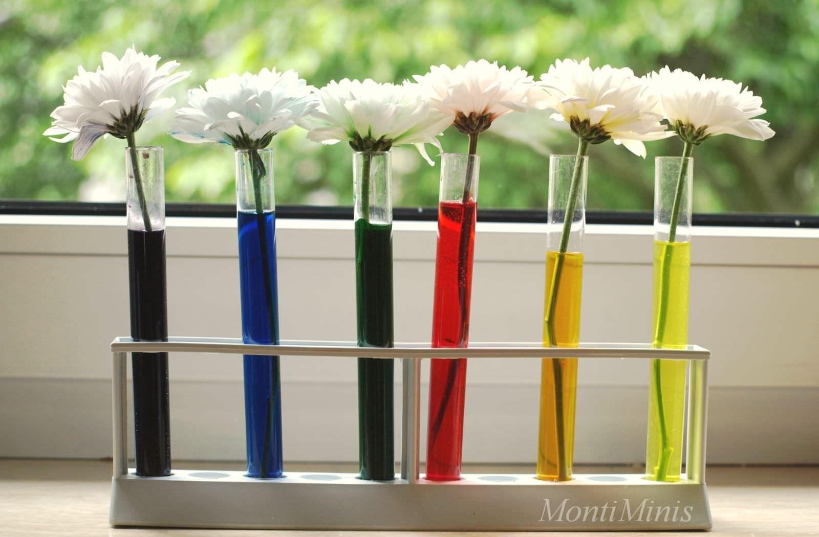 Regenbogenblumen - Experimentieren mit Farben - Montessori Blog - MontiMinis #kitaräume