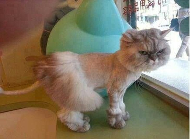 15+ Times Pet Haircuts Went So Wrong, It's Hilario