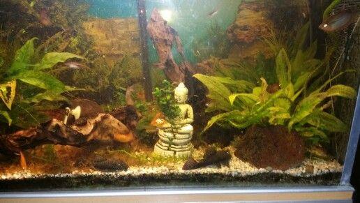 Thuis aquarium