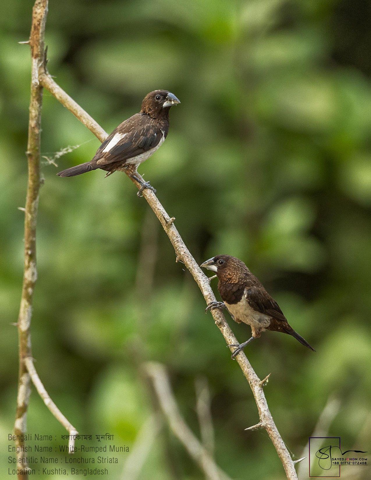 #wildlife #wildlifephotography #birds #picusxanthopygaeus #birdrules #birds_adored #BIRDS_iLLife #naturist #best_birds_planet #your_best_birds #natureinfocus #EarthCapture #YourShotPhotographer #earthpix #naturephotography #naturelovers #picoftheday #daulatpur #kushtia @best_birds_of_world #best_birds_of_world @BBCErth #bangladesh #birdsofbangladesh #outdoors #sayedjohon #sayedjohonPhotography #wildlifebangladesh