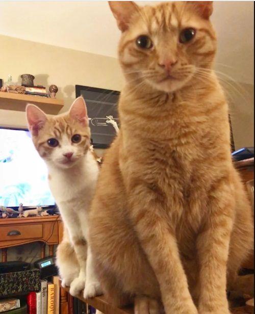 Бродячий котенок пришел за помощью в семью, и их кот взял его под свое крыло (10 фото)