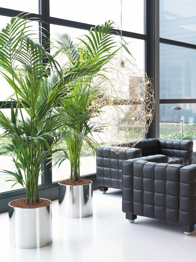Interior Plant Displays, Indoor Plants | Garden Indoor Plants ...