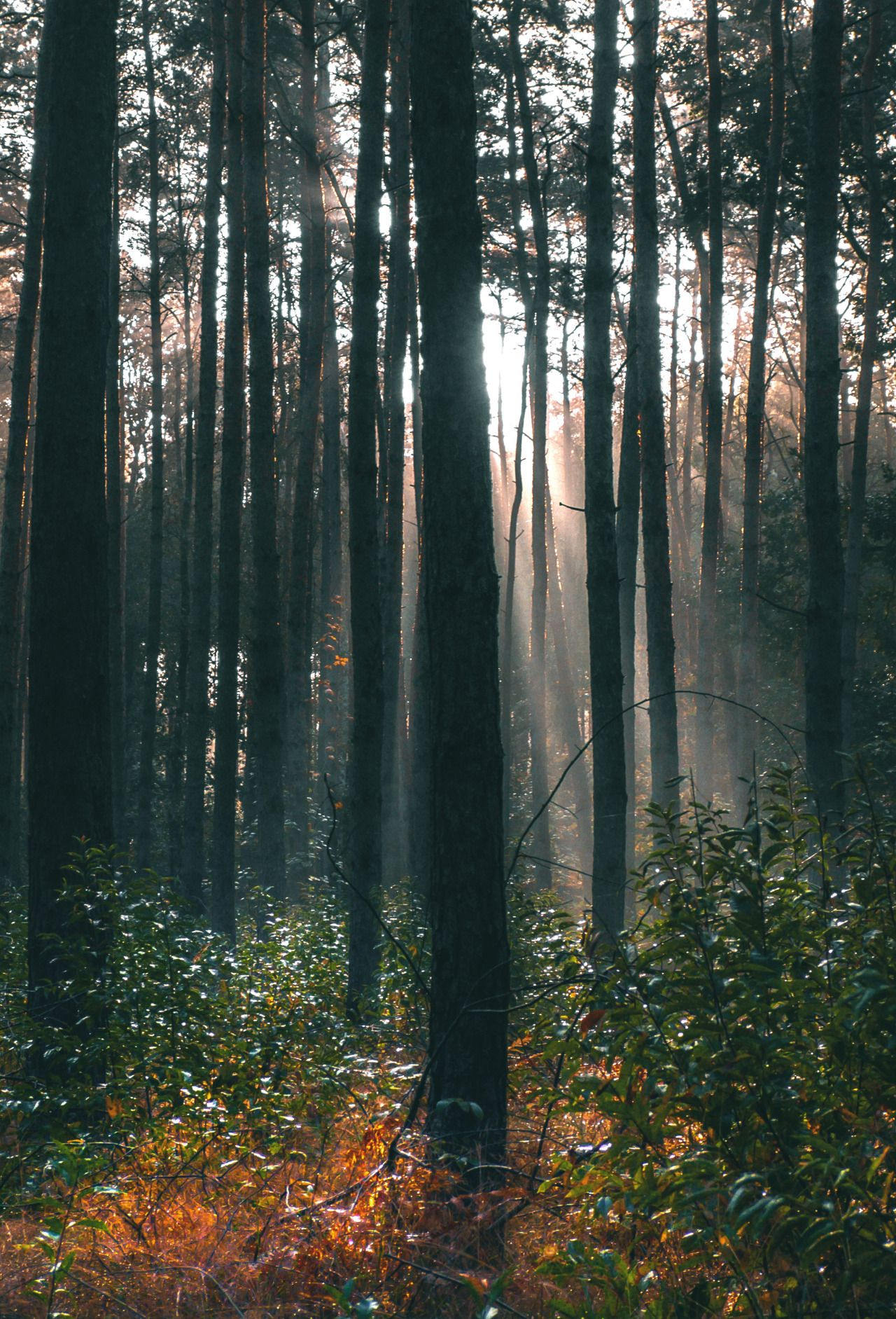 Keep me busy with my old cam by Denny Bitte - #artists #autumn #fog #Forest: #landscape #nature #on #original #photographers #sunrise #tumblr