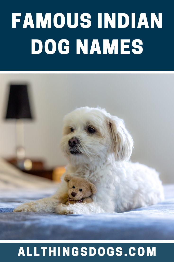 Funny Names For Dogs In Hindi : funny, names, hindi, Meaning, Hindi, MEANONGS