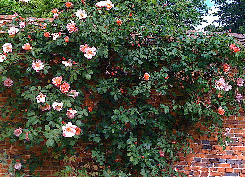 English rose gardens english rose garden seend - English Rose Garden It Was Still Early For Roses But The Mild Spring Brought
