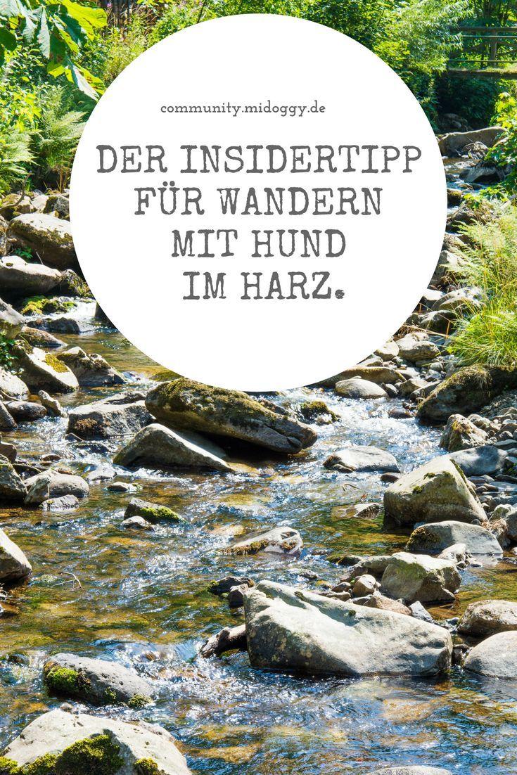 Photo of Hiking tip Harz: Favorite round of Okerklippen | miDoggy community