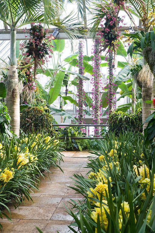 Escape to the Chicago Botanic Garden Orchid Show http://www.chicagonow.com/show-me-chicago/2015/02/escape-to-the-chicago-botanic-garden-orchid-show/