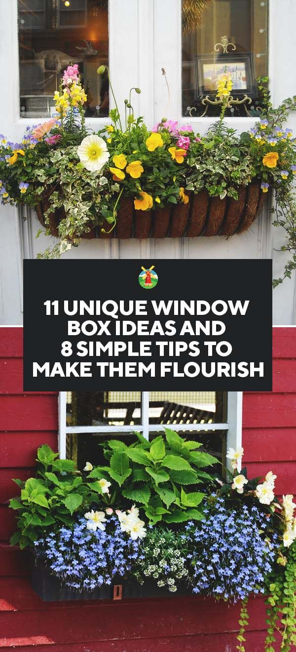 Window box ideas without flowers   tips to make your window box flourish and  ideas to inspire you