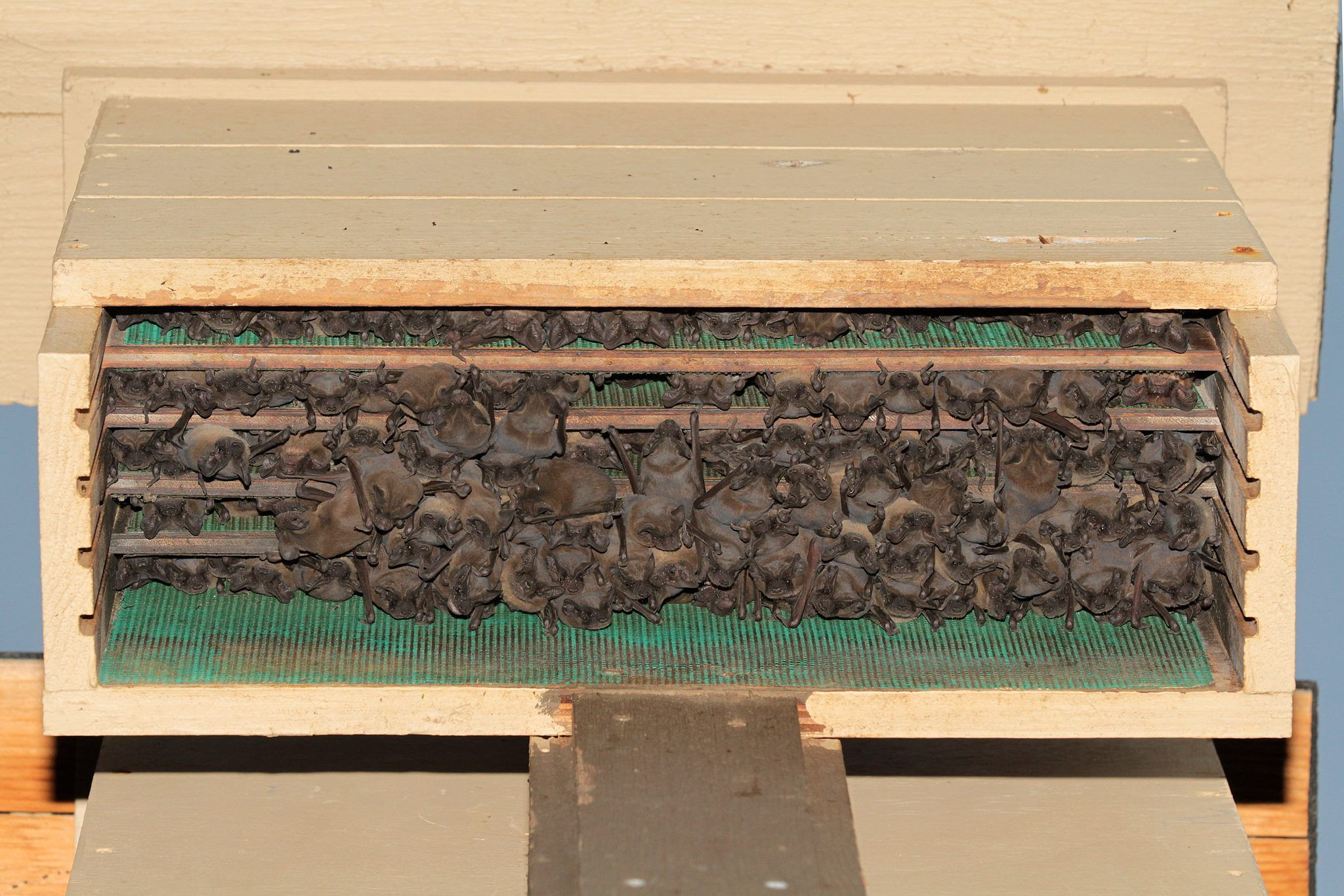 It Is Amazing How Many Bats Can Fit Into A Bathouse Bat House Bat Houses Bat House Diy