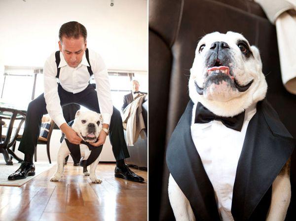 Like Father Son Wedding Dog Bulldog In Tux At