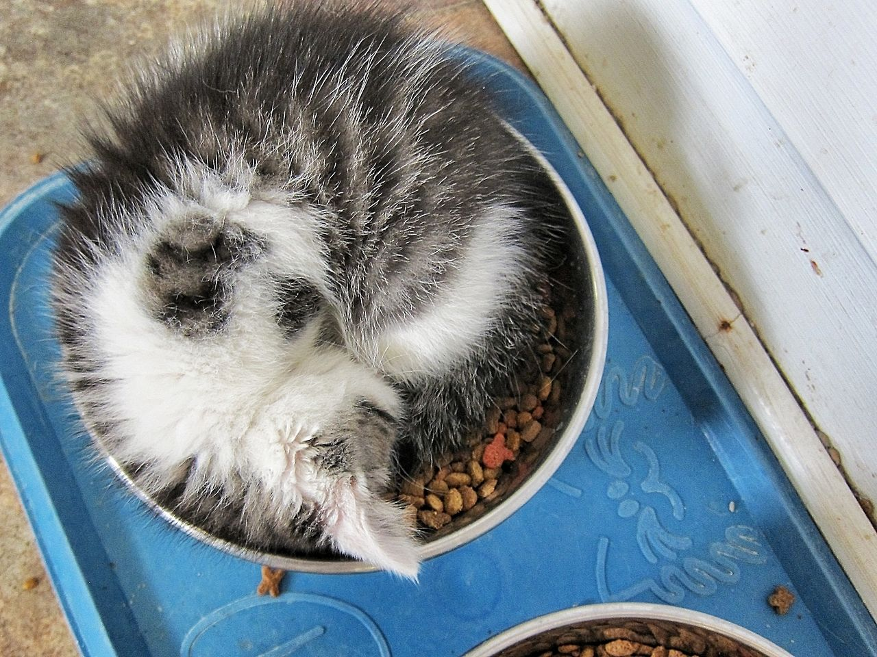 Nap Time By C White Haired Old Grouch Crazy Cats Crazy Cat Lady Starter Kit Funny Cat Pictures