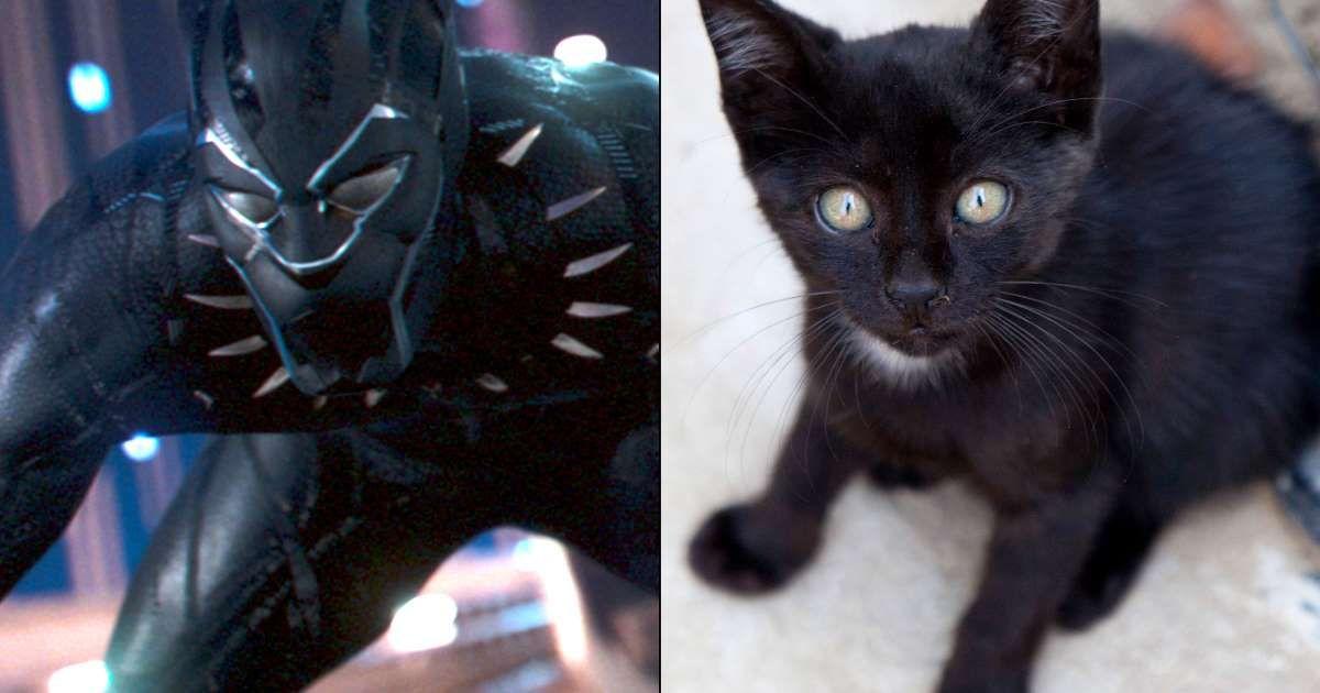 It's not Halloween, nor is it National Black Cat