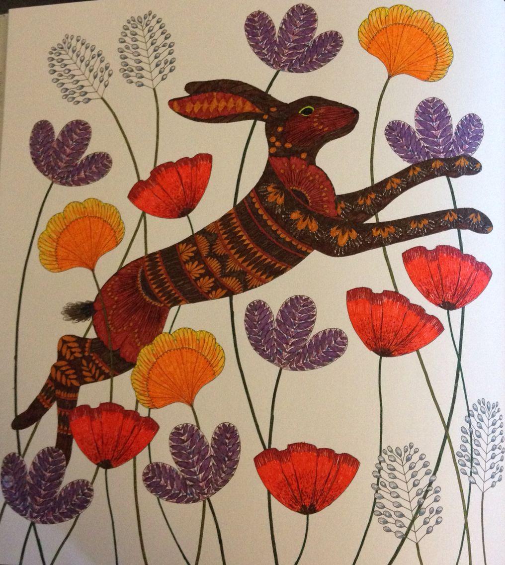 Millie Marotta39s Animal Kingdom adult colouring a hare