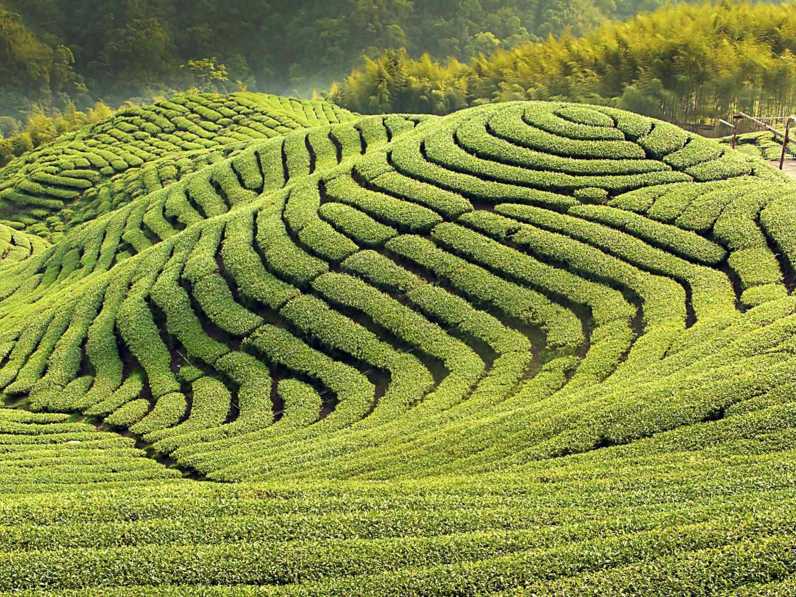 4bb9f73b97eed7fb742f8e3f47018e93 - Things To Do In Tea Gardens