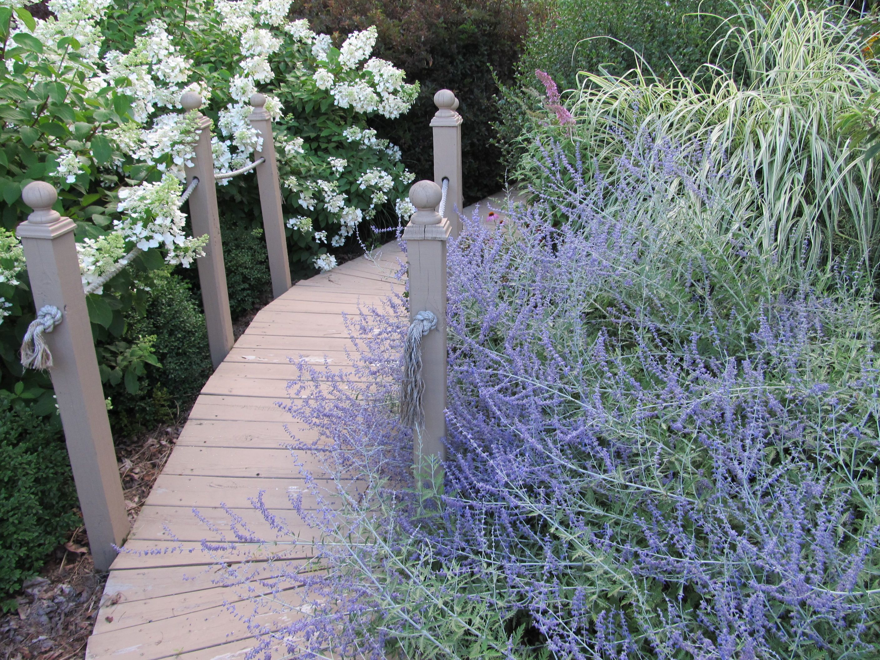 Wooden Garden Path With Russian Sage