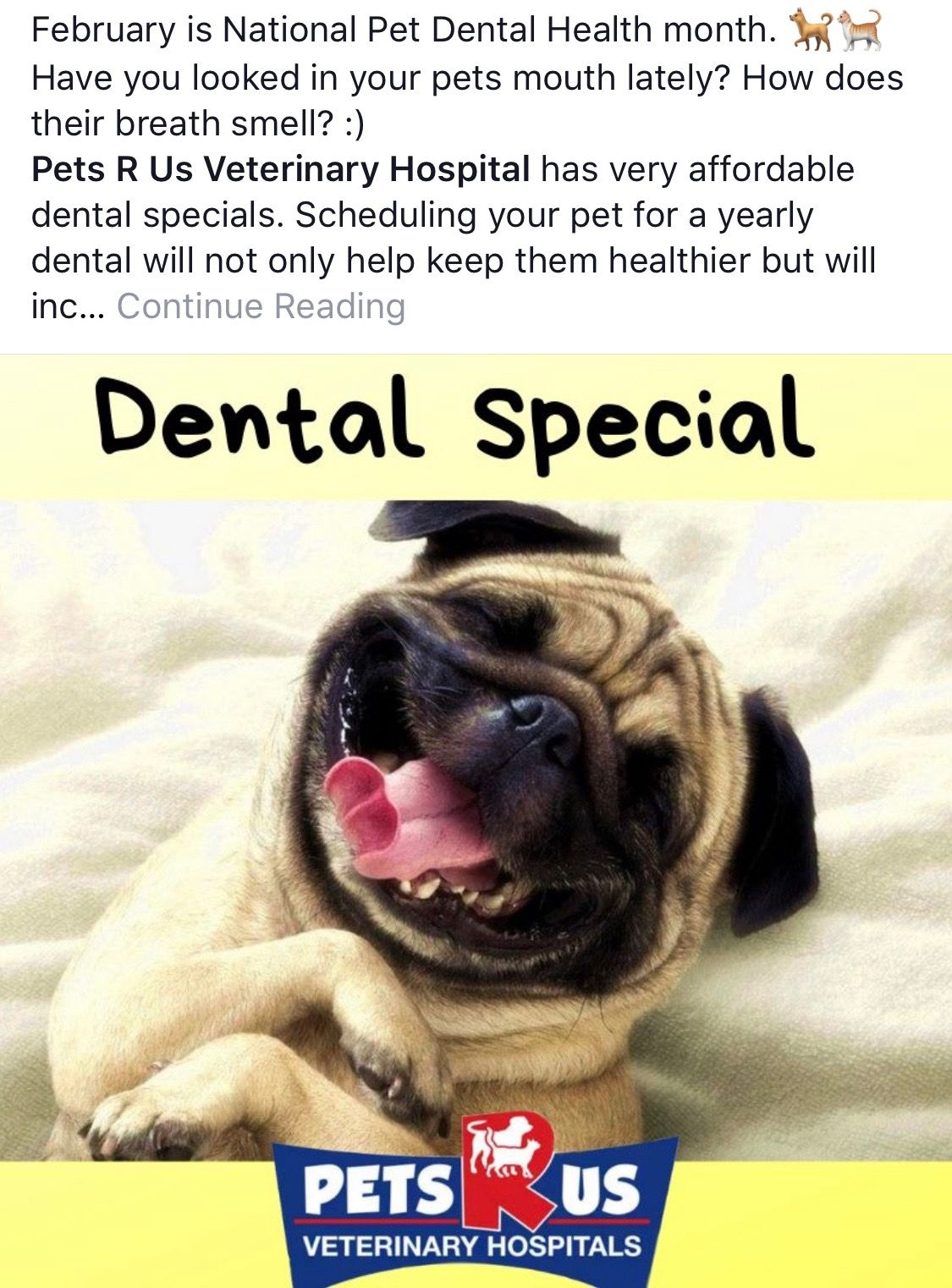 Pin By Rose Ramirez On Beautiful Dog S Pet Dental Health Pet Dental Health Month Dental Health Month