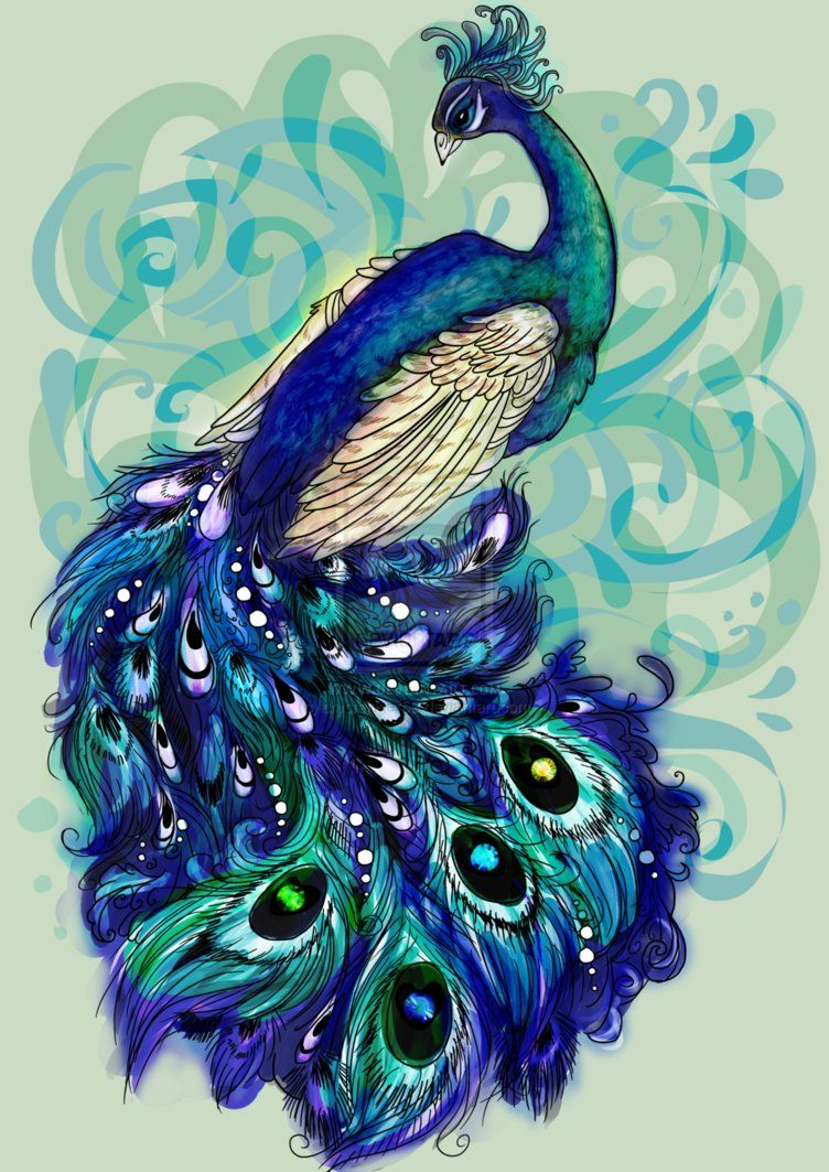 peacock drawing with colour wwwimgkidcom the image