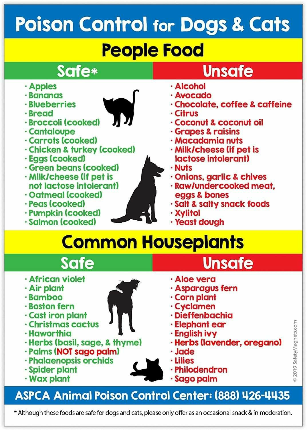 Pin By Cynthia Nicks On Cat Care Facts On Health And Behaviors Body Language News Info Etc Toxic Plants For Cats Poison Control For Dogs Dog Cat