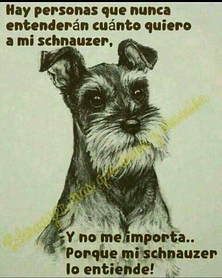 54da9d61cdccea53cbf3e2e2531decfb Jpg 720 901 Poemas Para Perros Amantes De Perros Perros Frases