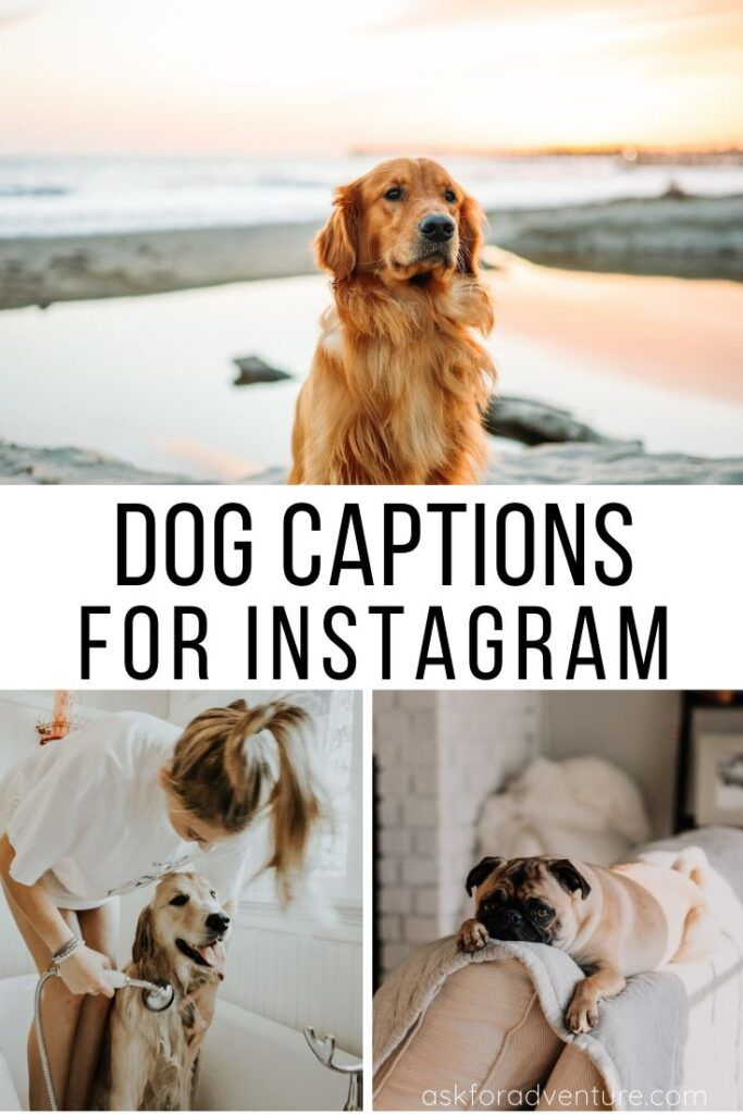 65 Dog Instagram Captions for Pictures of Your Furry Friends - Ask for Adventure
