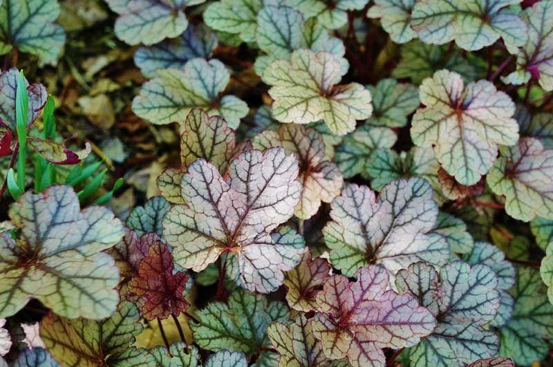 15 Perennials that Grow in Zone 5 in 2020 | Perennials ...