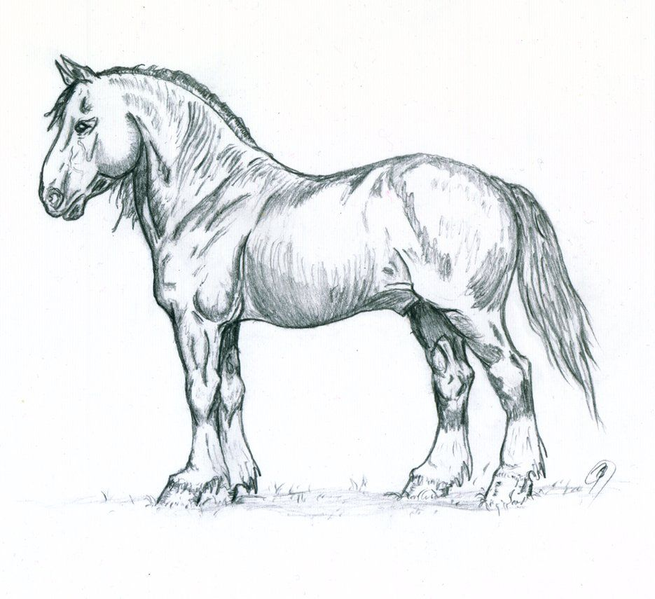 White Werewolves S Image Horse Sketch Horse Drawings Horse Art Drawing [ 855 x 935 Pixel ]