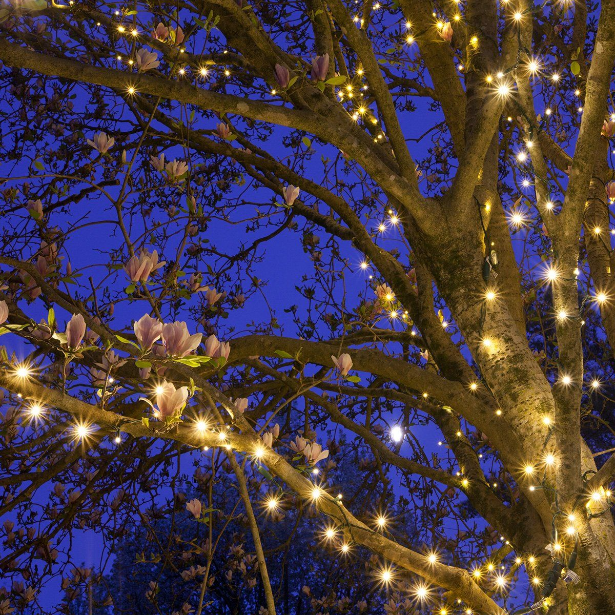 50 Lights 4 Spacing 17 ft Indoor//Outdoor LED White Christmas Lights Outdoor Tree Lights Christmas String Lights Wedding Party Decorations Cool White LED Christmas Mini String Light Set