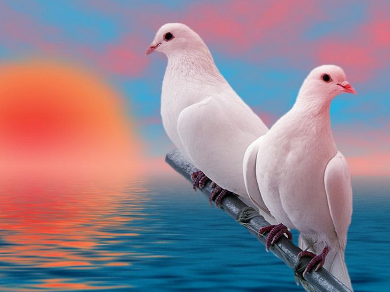 Beautiful Birds Pair Hd Wallpapers Beautiful Birds Hd Backgrounds Love Wallpaper