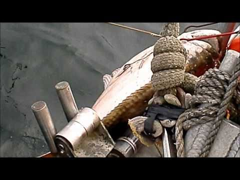 350 Pound Halibut Caught Longlining - YouTube