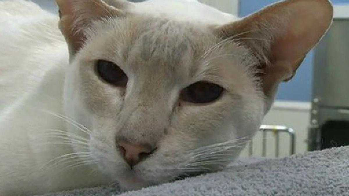 Versehentlich versendet: Katze überlebt tagelange Reise im Postpaket