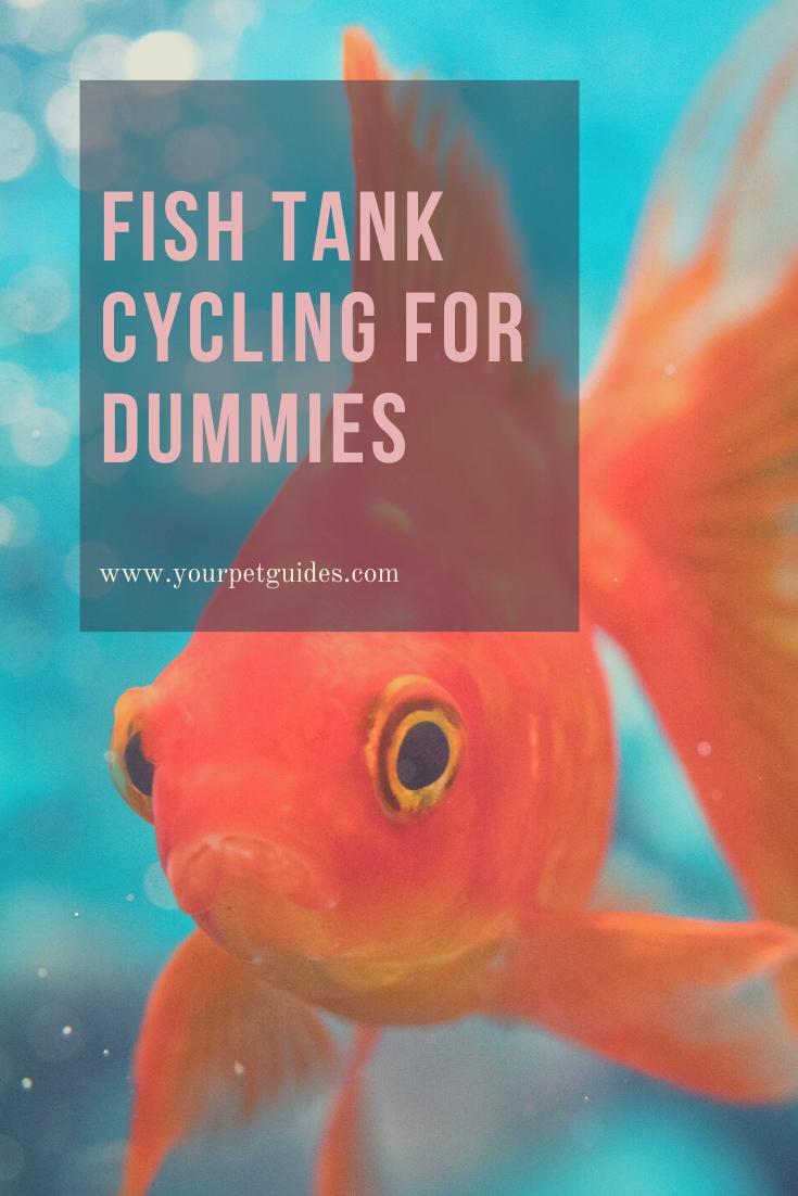 Cycling Your Aquarium For Dummies In 2020 Aquarium Fish Tank Freshwater Aquarium Fish