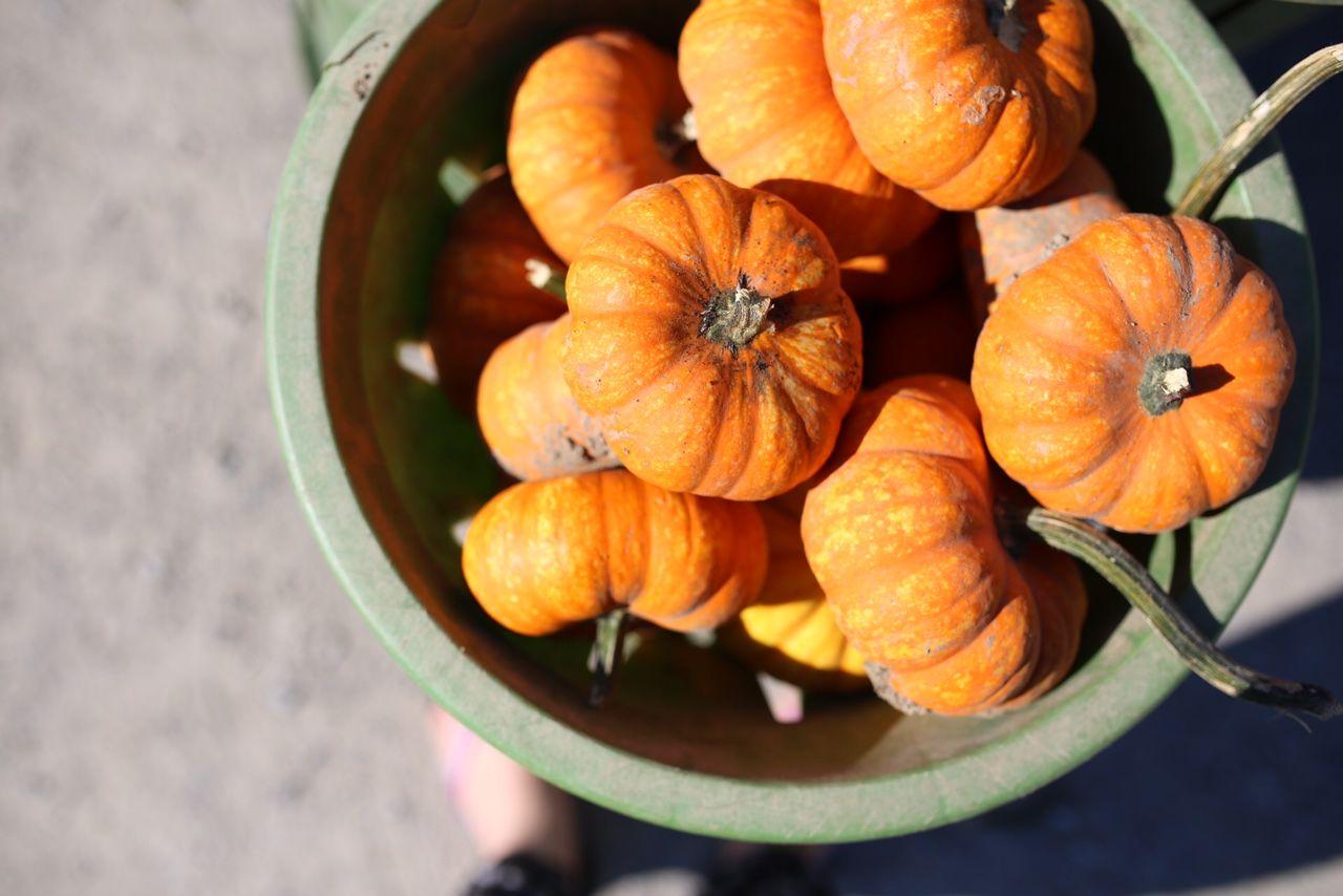 Prince Edward County: Farmers Markets, Honig & lokale Erzeugnisse  Kürbis in allen Farben bei Hagerman Farms
