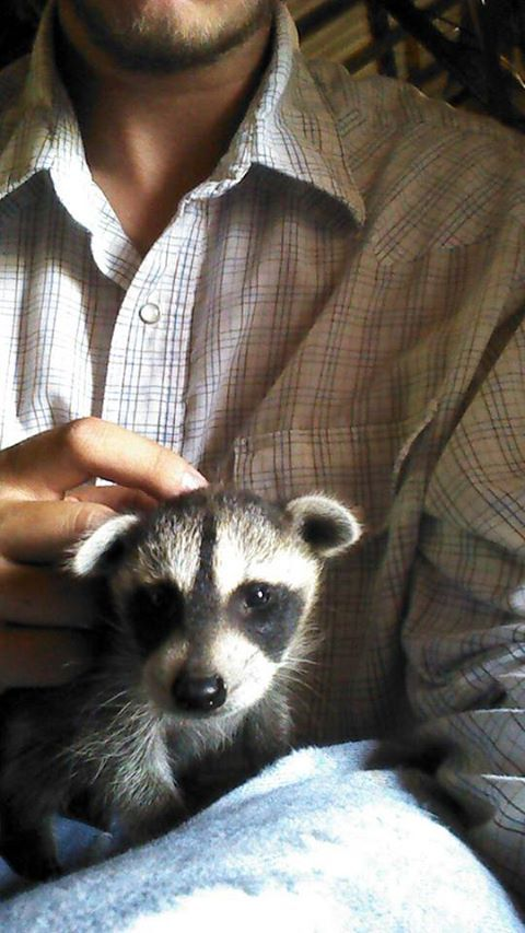 My cousin found a raccoon.  I feel that I *NEED* it.