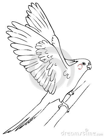 Flying Parrot Cockatiel Animal Drawings Bird Coloring Pages