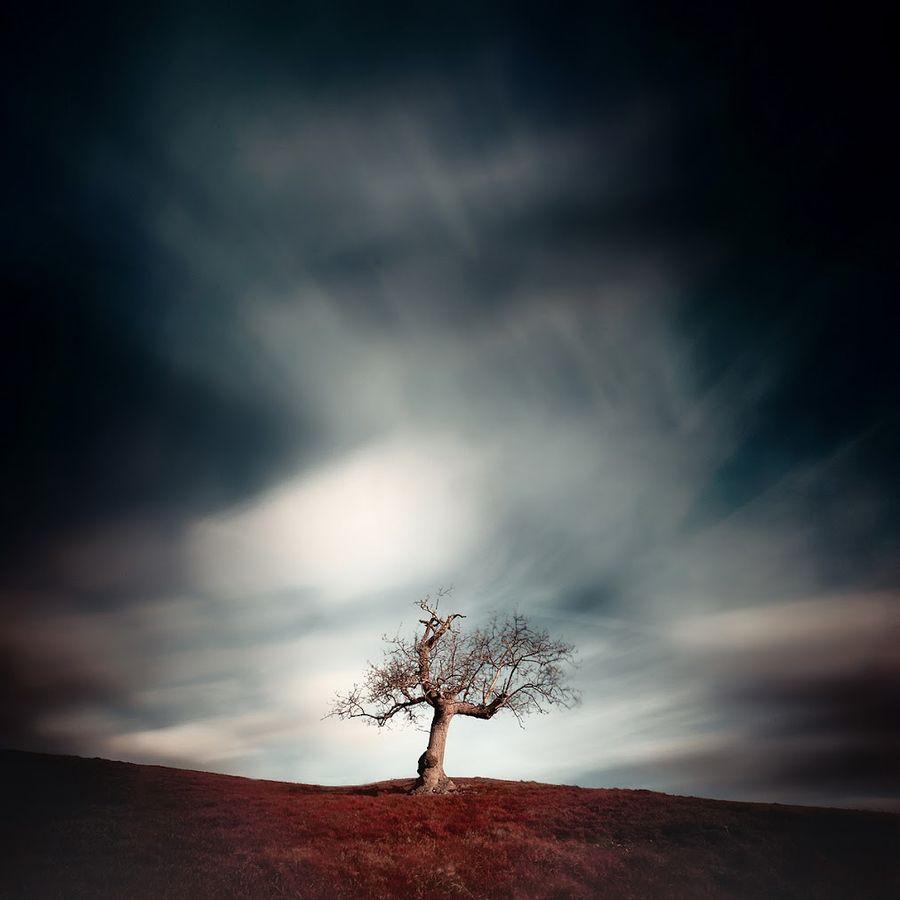 Magic Tree series
