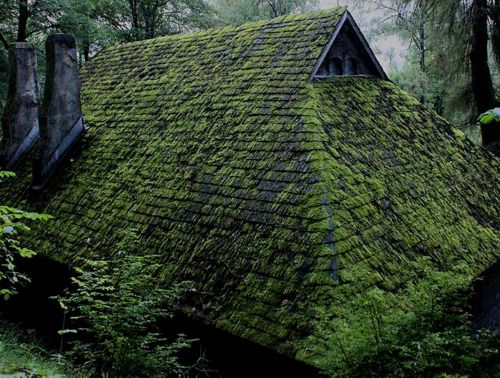 N0bodysdaughter 75040 Forest Cabin Forest Green Roof