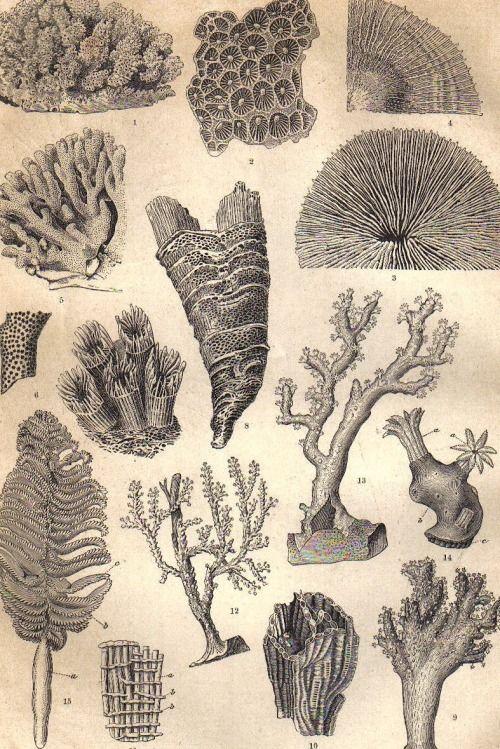 Sea Anemone Tattoo : anemone, tattoo, UTOPIARCHIVE, Magictransistor:, Anemones,, Actiniaria,..., Aquatic, Artwork,, Sketch, Inspiration