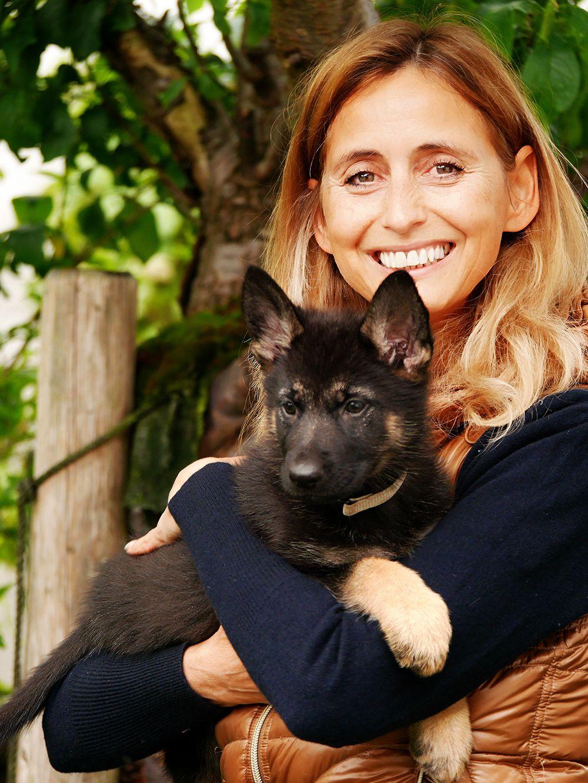 GSD Puppy Hunde, Schäferhunde, Hundeschule