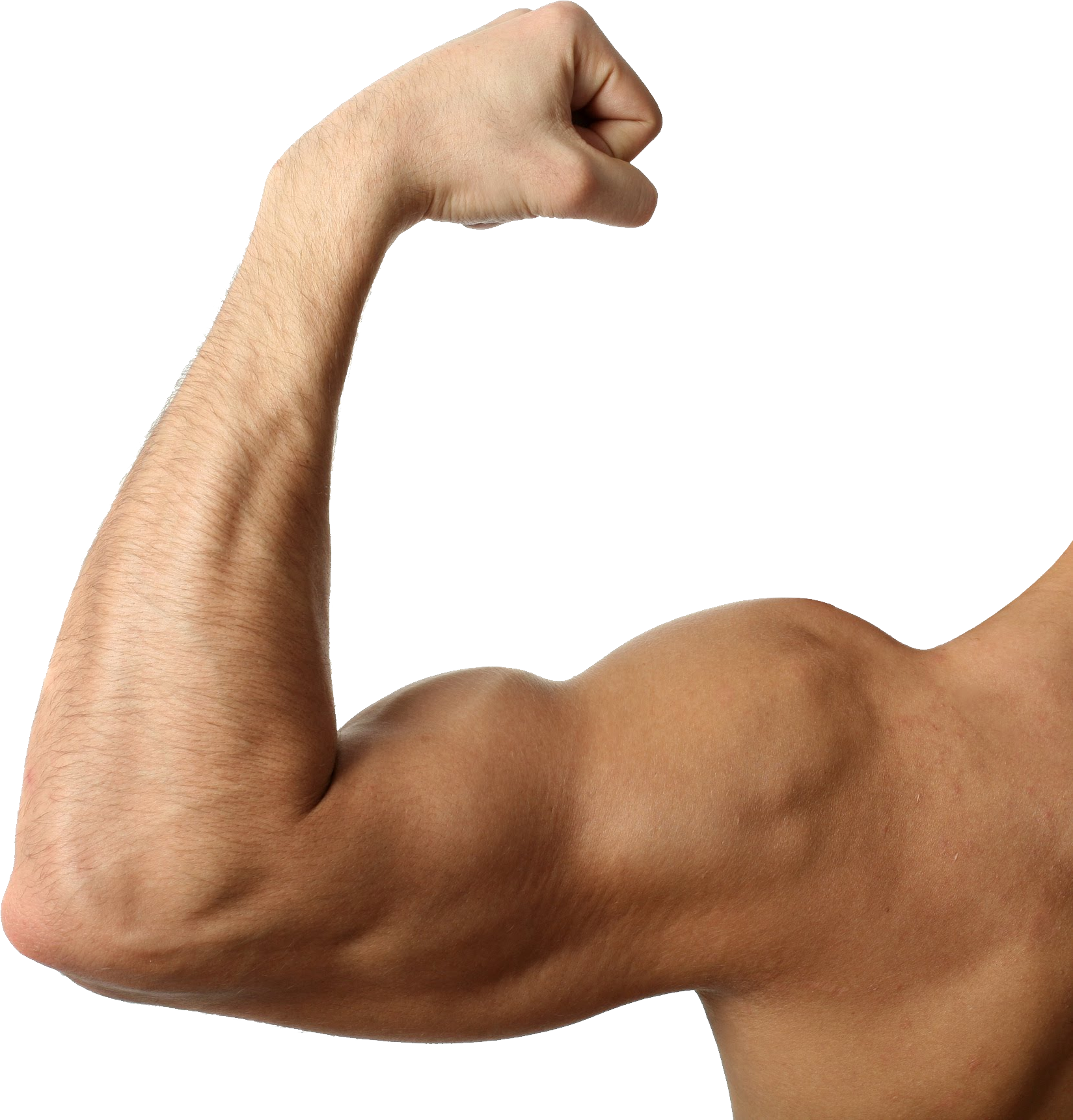 Muscle Png Image Body Builder Muscle Arm Muscles