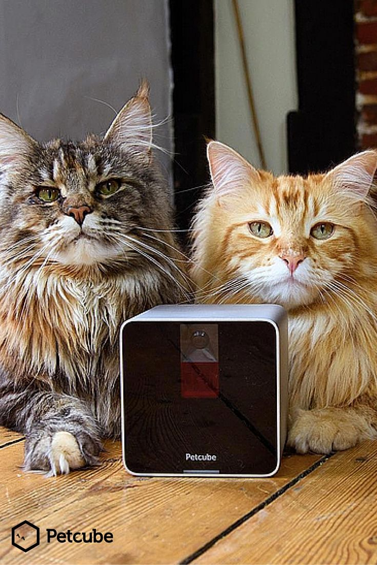 Hey! Hooman! Come play wif us. Download dis app called