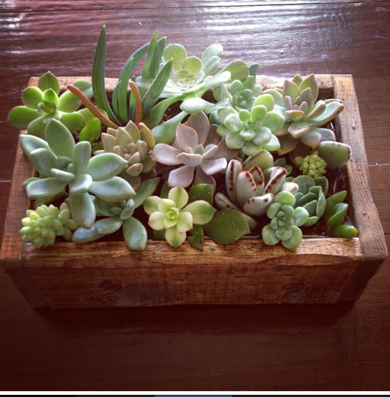 Succulents with Jacqueline francis | Handmade for the Holidays ...