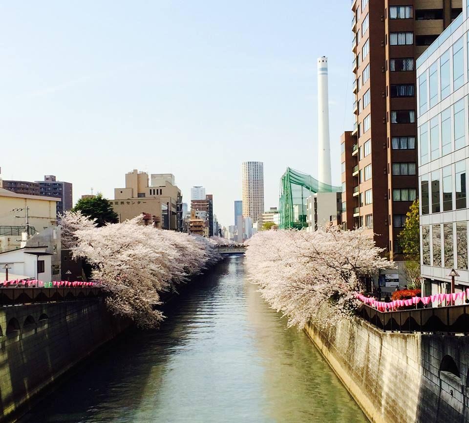 Meguro River #Japan 日本国