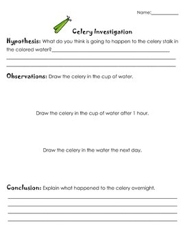 Celery And Colored Water Experiment Worksheet