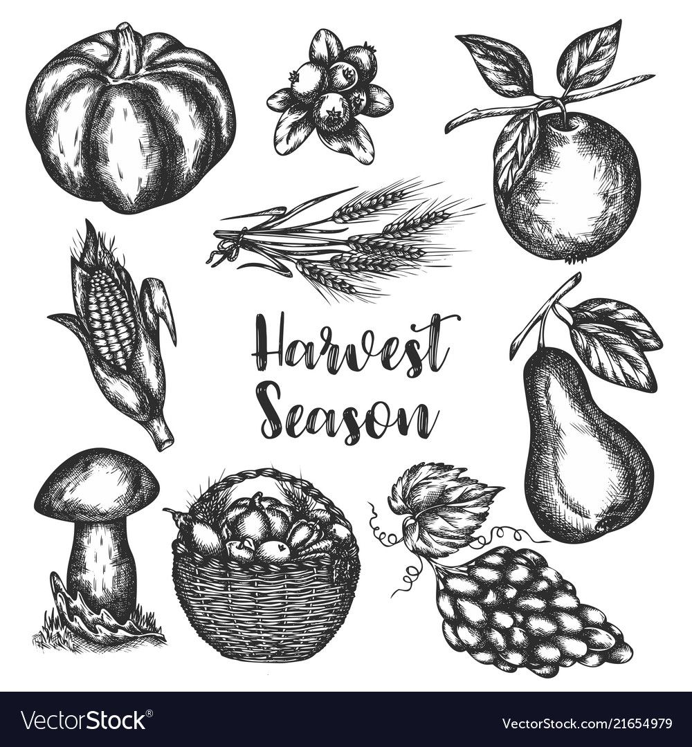 Harvest of vegetables hand drawn Royalty Free Vector Image